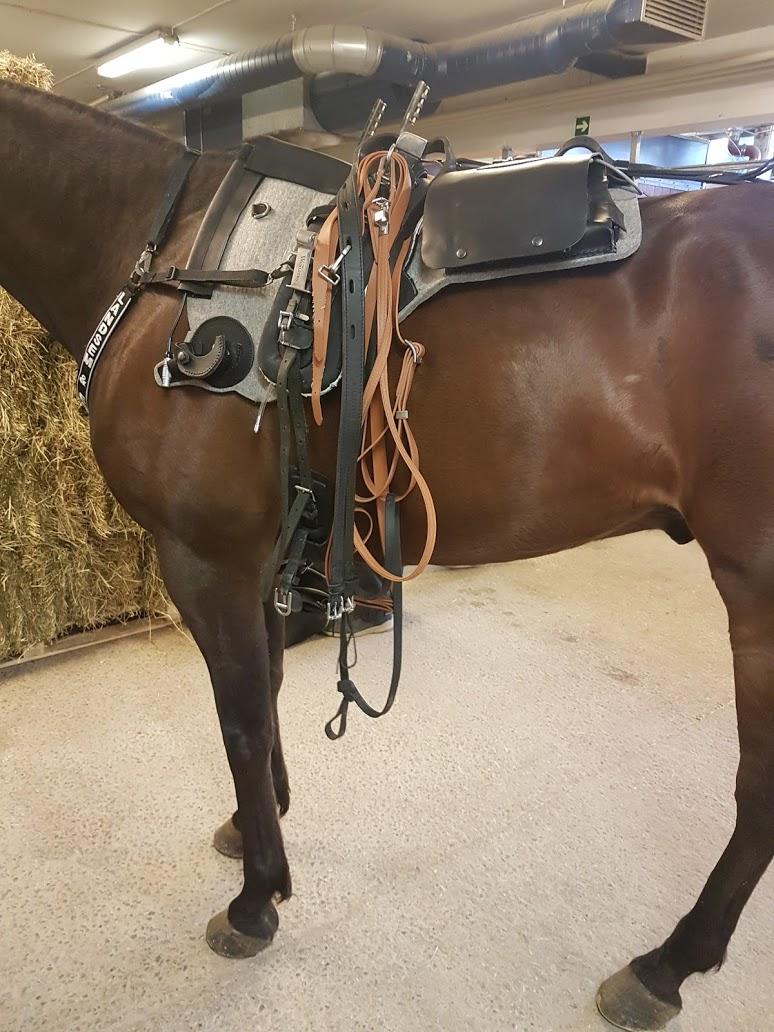 Prestasjonssvikt hos hest – et sammensatt problem