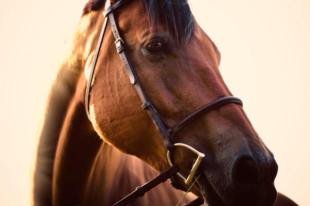 Kiropraktikk for hest