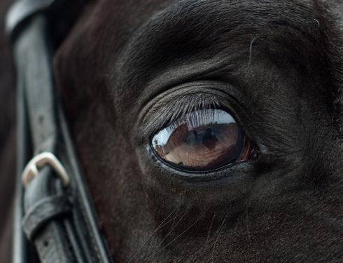 Øyeplager hos hest