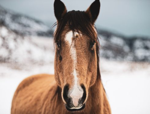 Hest, FOTO: LOGAN WEAVER/Unsplash