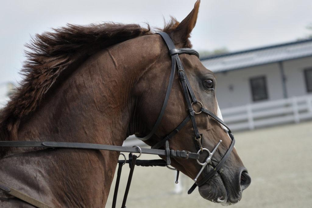 Kolikk hos hest